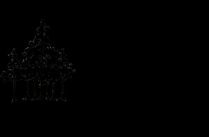 Barna Trees