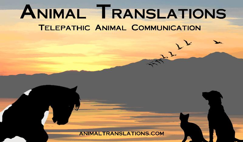 AnimalTranslationsLogonewest