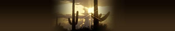 cactus-scene-header.jpg