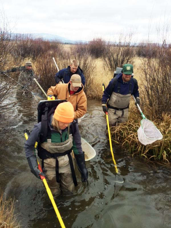HFF seasonal employees and BYU-Idaho students electrofishing on Fish Creek in Harriman State Park East.