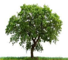 Robert Philbin Tree