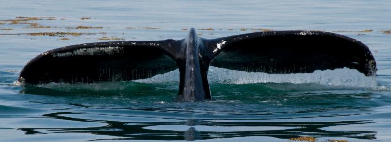 Whale's Tail Alaska