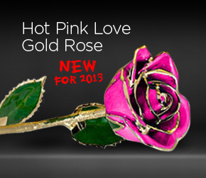 Hot Pink Love Gold Rose
