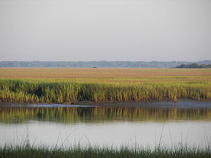 A typical Lowcountry scenic view
