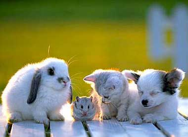 cat mouse dog bunny