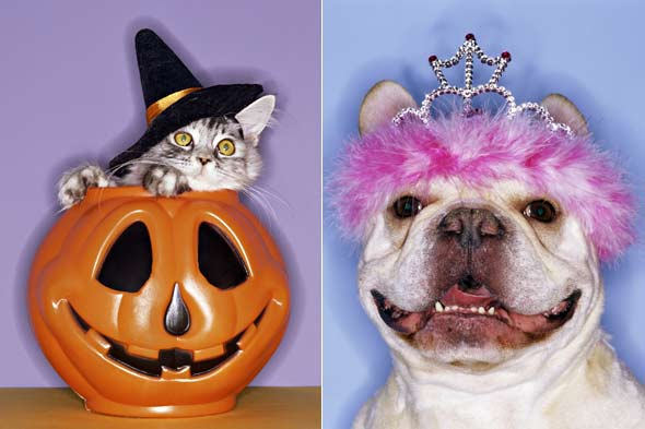 cat and dog halloween