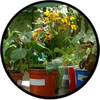 plants ready to swap
