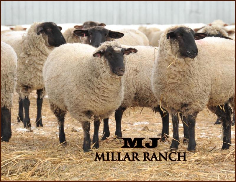 MJ Millar Ranch