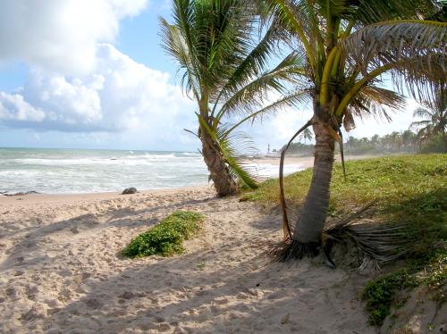 Palm Beach - Paradise