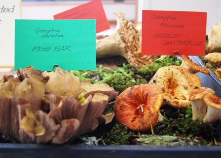 Mushroom Show Tray
