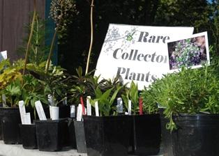 Plant Sale Rare Plants