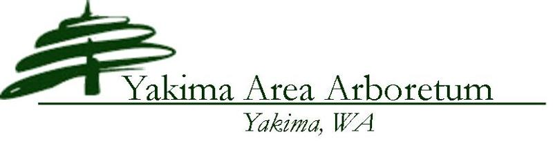 Logo Header YAA