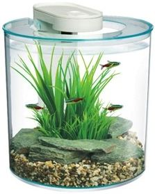 ... most stylin? desktop aquariums in the store! - Wilmette Pet Center