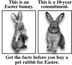 Rabbits and Easter don't mix