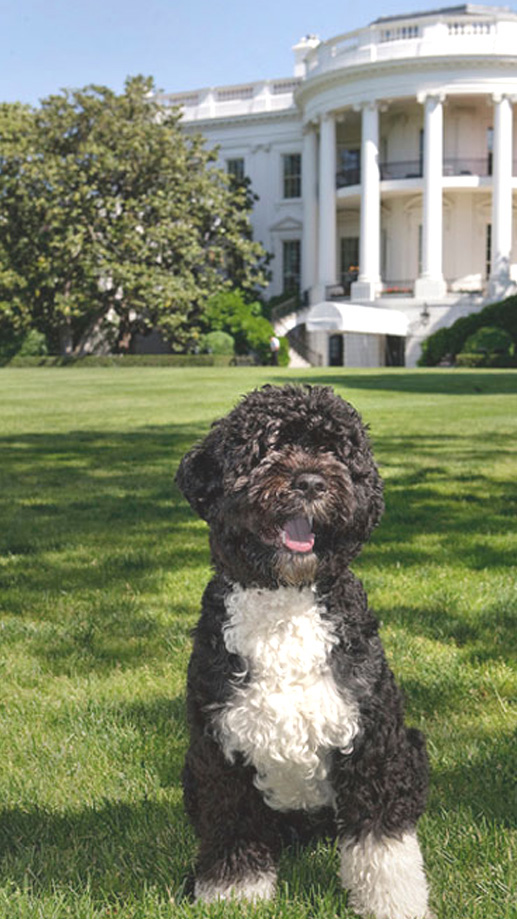 Bo, first dog Obama