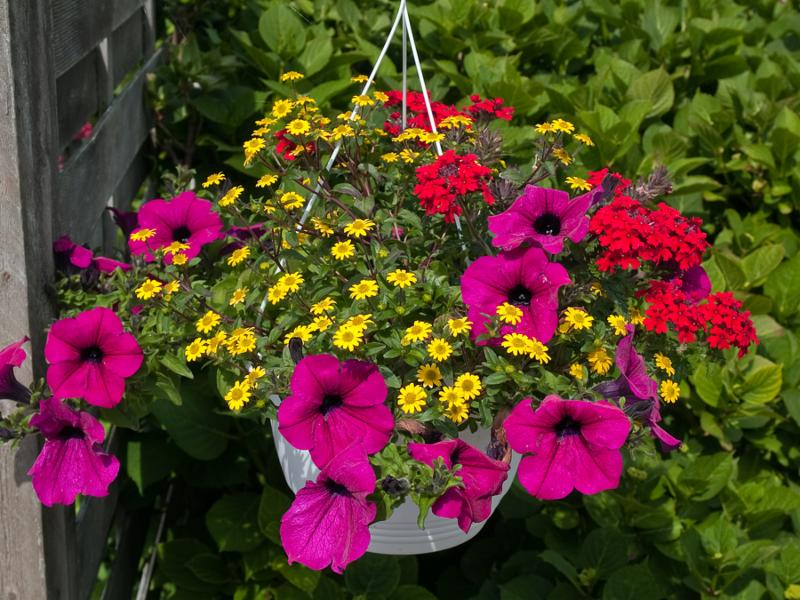 Beautiful hanging flowerpot basket with red flowers in a garden