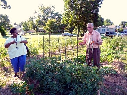 An older Caucasian man holding tomatoes behind staked tomato plants while an African-American woman smiles at him.