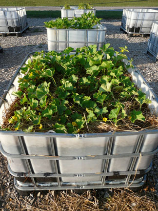 Raised container beds
