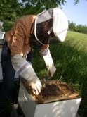 Beekeeping at LotFotL