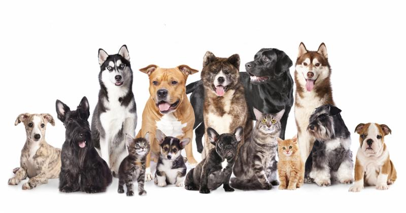 Cat and dog,Group of dogs and cats  sitting in front of a white background