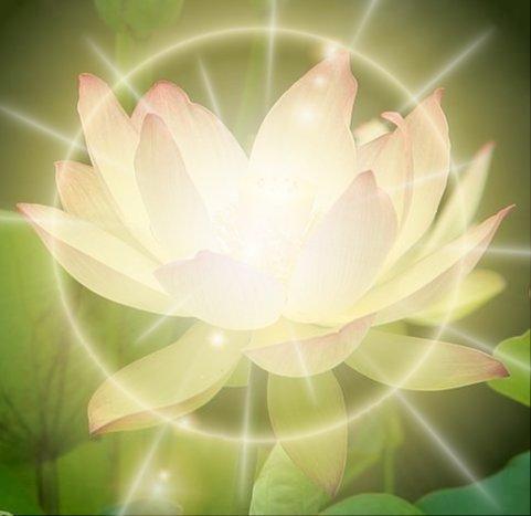 illuminated lotus