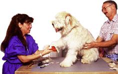 dog-grooming-sm.jpg
