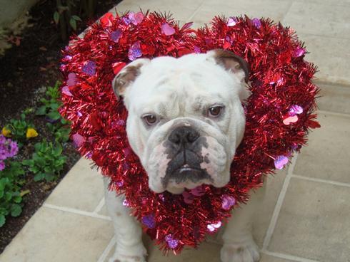 happy valentines day from white dog cafe - Dog Valentines Day