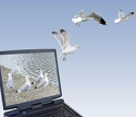 Laptop Birds