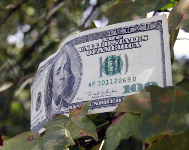 Benjamin - Dollar