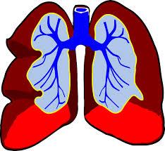 Naturopathic Medicine in Utah - Respiratory