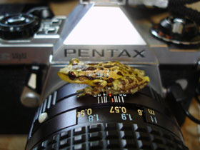 Small frog sitting on a camera