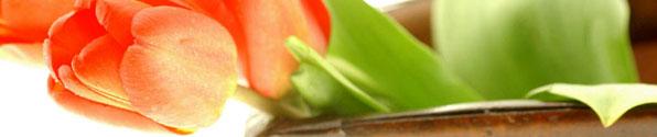 tulip-header.jpg
