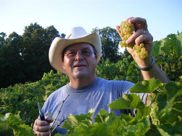 Wake in the vineyard