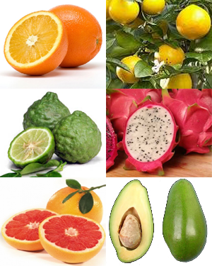 Many Fruit & Citrus Trees To Choose From