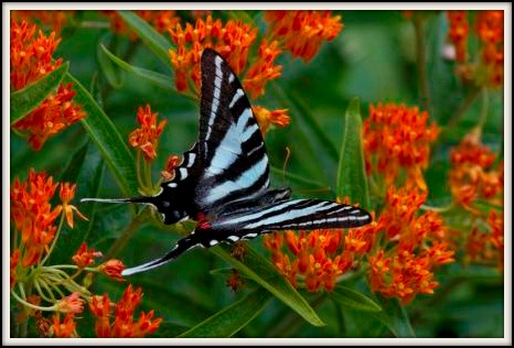 Butterfly Photo by Eric Gofreed
