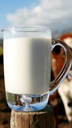 Pitcher of raw milk