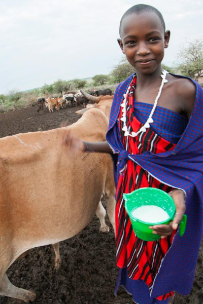 Maasai Stoves & Solar Project