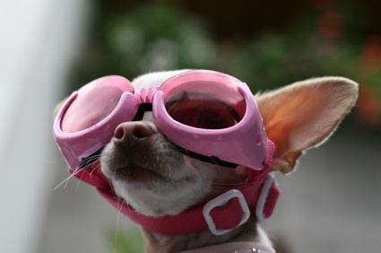 Dog with pink goggles