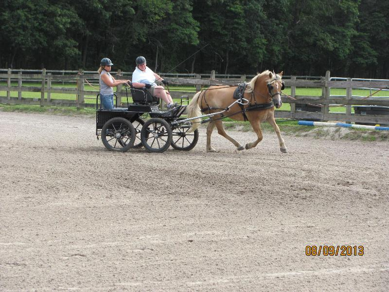 Boo Fitch Driving, Sara Schmitt Navigating with horse Wilbur owned by Nearaway Farms