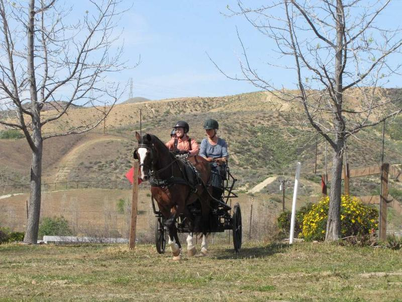 Stefanie Putnam driving Ruperty 15.2 Welsh Cob owned by Diane Kastama (Ann McClure, Marcia Putnam on carriage)
