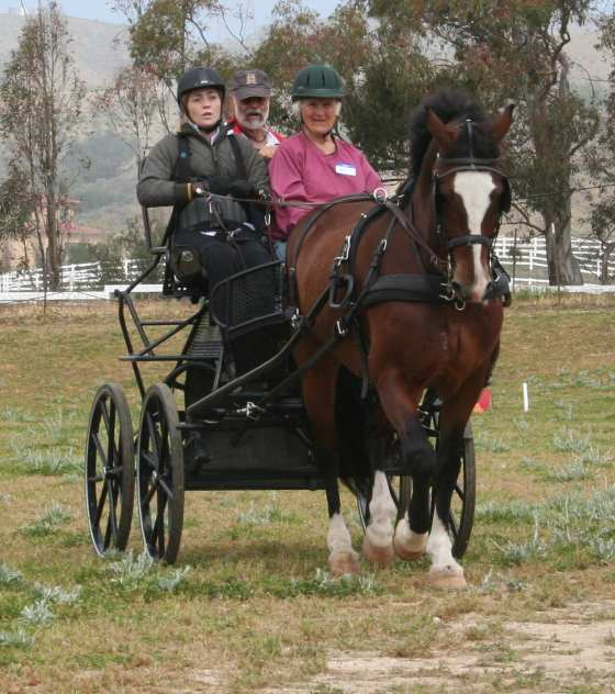 Stefanie Putnam driving Rupert 15.2 Welsh Cob owned by Diane Kastama  (Ann McClure, Hardy Zantke on carriage) Photo by Pat Kastama