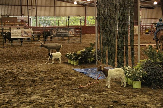 World 2012 cowboy curtain goats