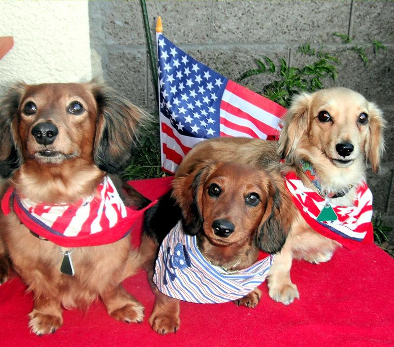 4th of july dogs