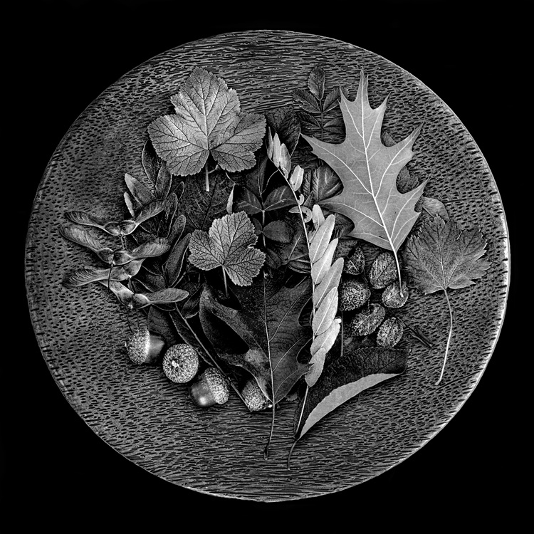 Plate of Leaves