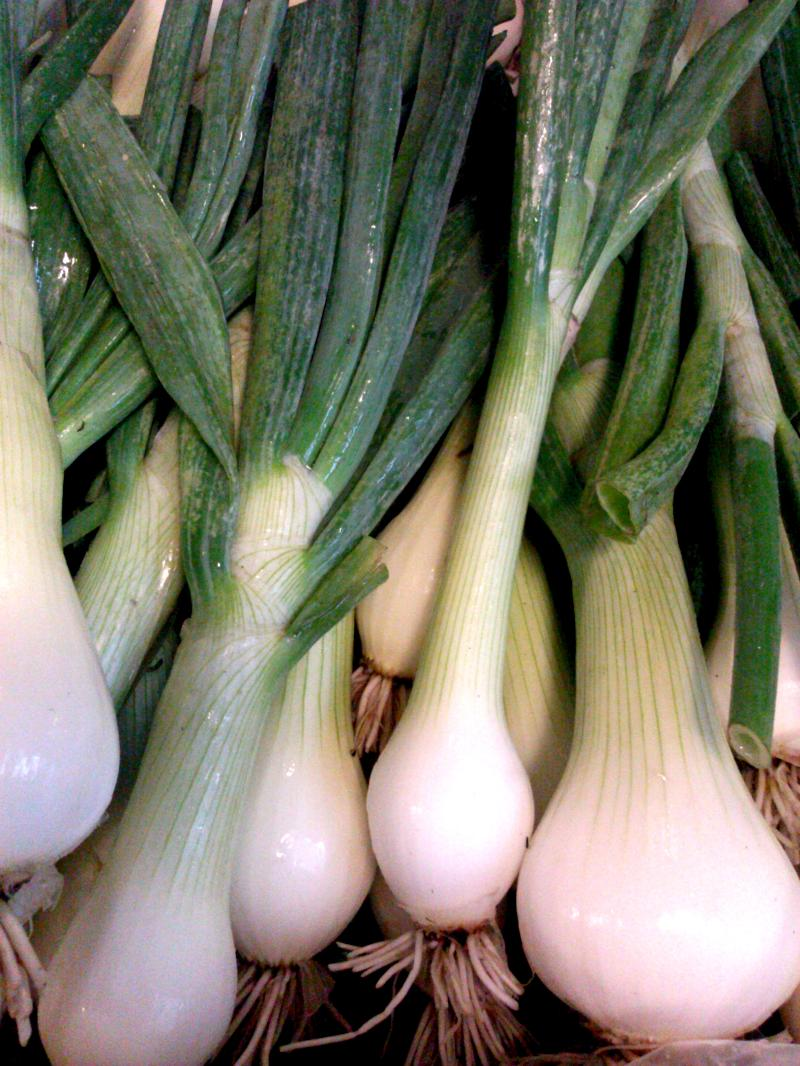 Cortland Onion
