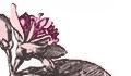 flowers_pink.jpg