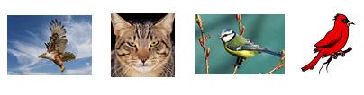 Birds and Cat