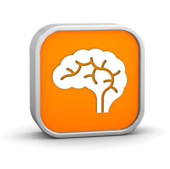 Early Brain Development  Info from Brain Insights