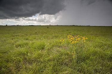 Glacial RIdge Prairie Preserve