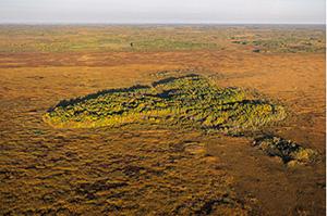 Aspen Parkland Aerial